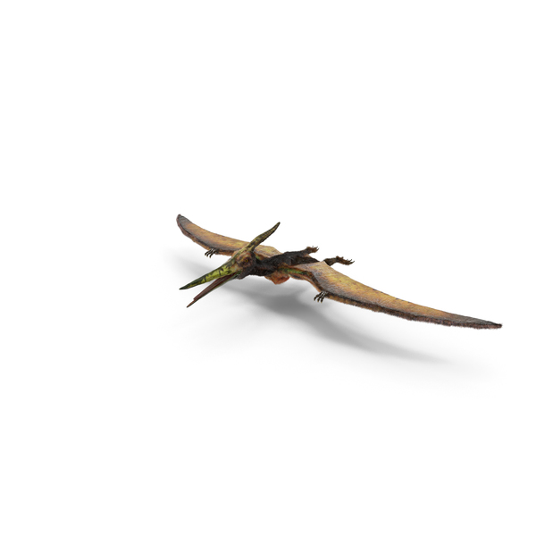 Pteranodon Flying Carnivorous Reptile with Fur PNG & PSD Images