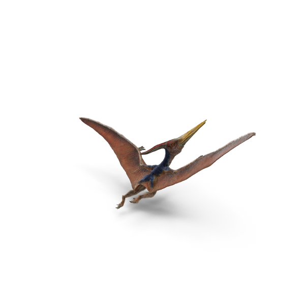 Pteranodon Flying Pose with Fur PNG & PSD Images