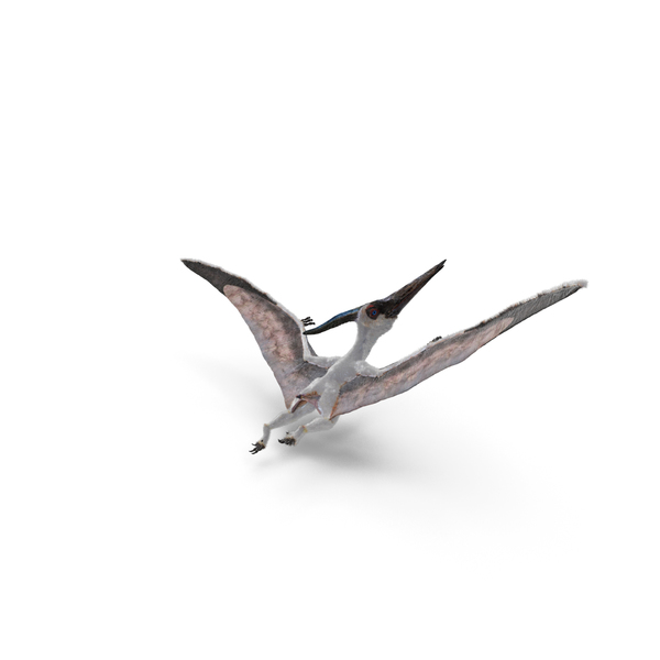 Pterosaur Pteranodon White Flying Pose with Fur PNG & PSD Images