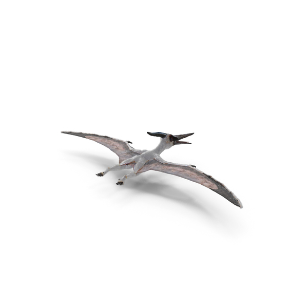 Pterosaur Pteranodon White with Fur PNG & PSD Images