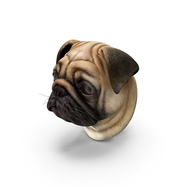 Pug Dog Head PNG & PSD Images