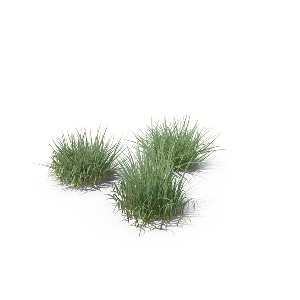 Flowering Plants: Purple Moor-Grass PNG & PSD Images