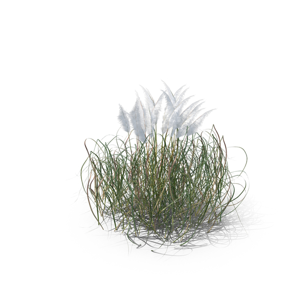 Grasses: Purple Pampas Grass PNG & PSD Images