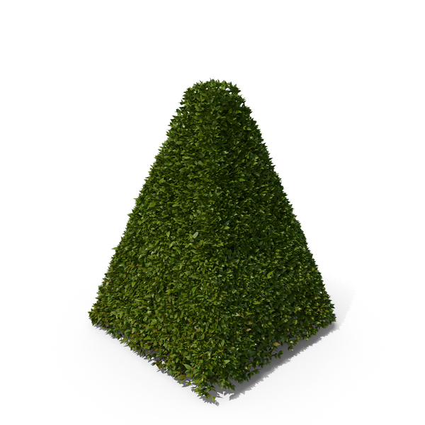 Topiary: Pyramid Hedge Shrub PNG & PSD Images