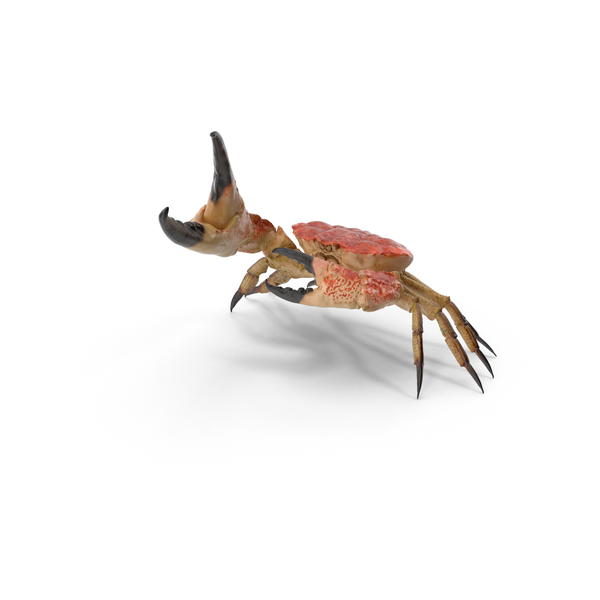 Queen Crab Object