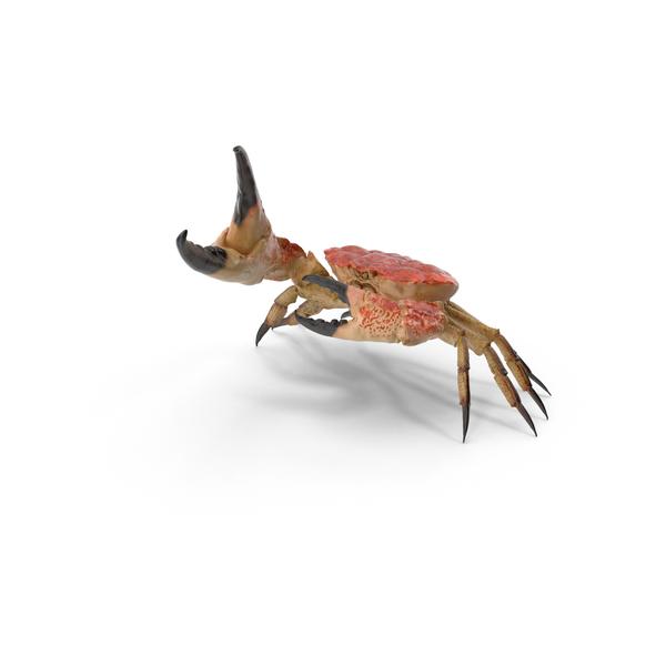 Queen Crab Object