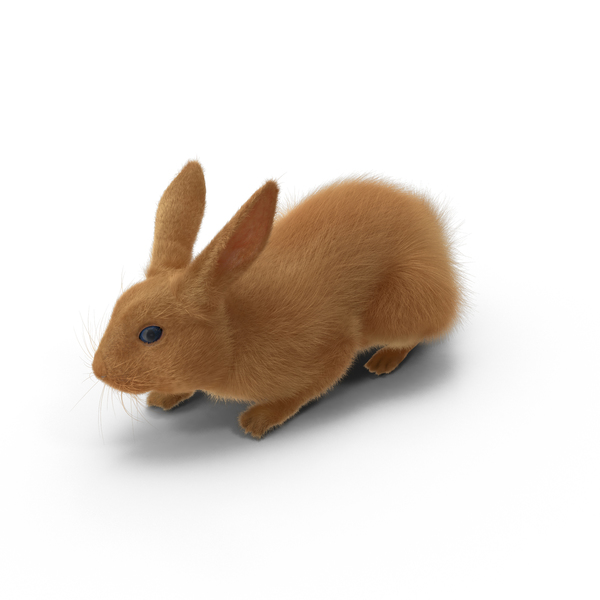 Rabbit Object