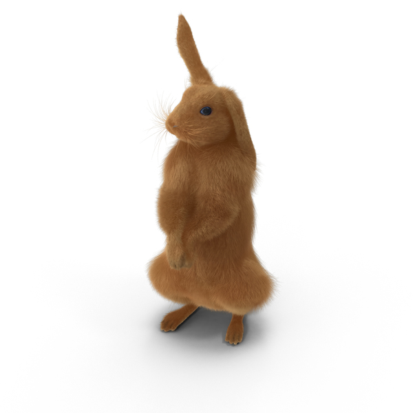 Rabbit Standing Object