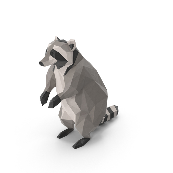 Raccoon PNG & PSD Images