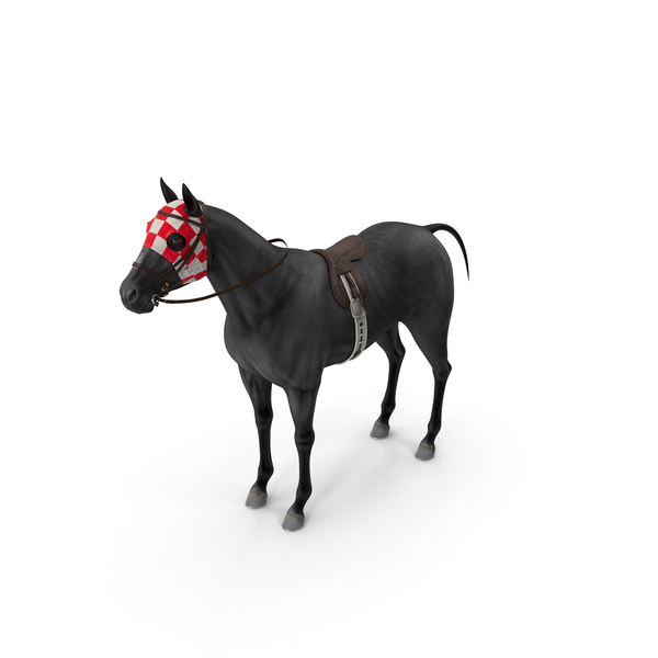 Racehorse Black PNG & PSD Images