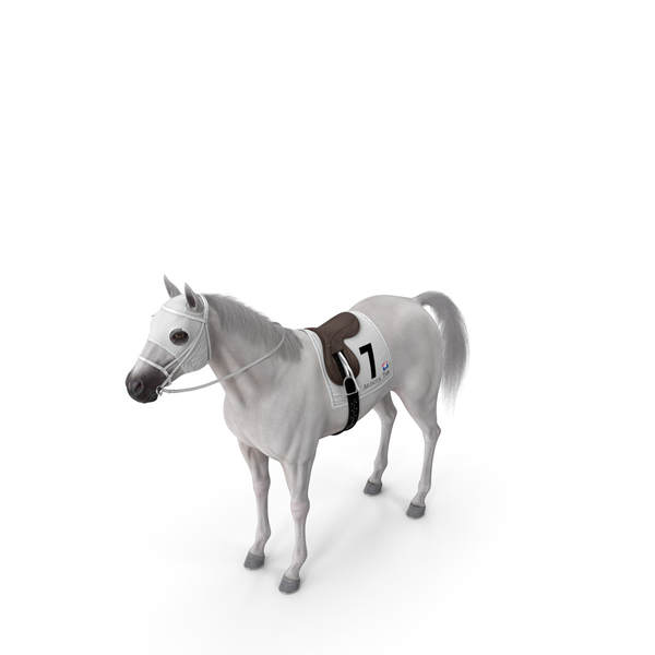 Racehorse White Fur PNG & PSD Images