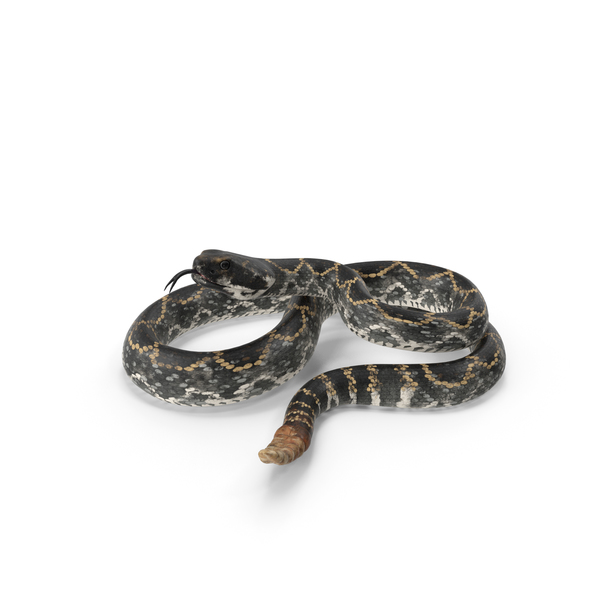 Rattlesnake PNG & PSD Images