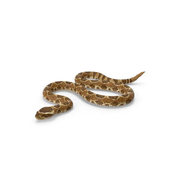 Rattlesnake Crawling PNG & PSD Images