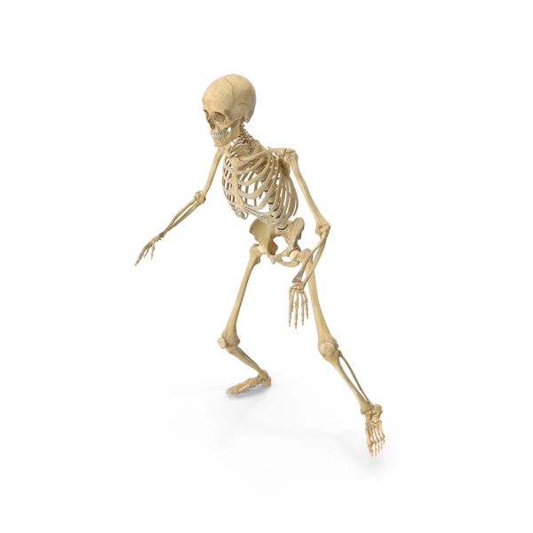 Real Human Female Skeleton PNG & PSD Images