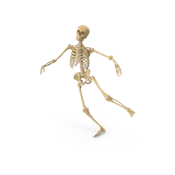 Real Human Female Skeleton Falling PNG & PSD Images
