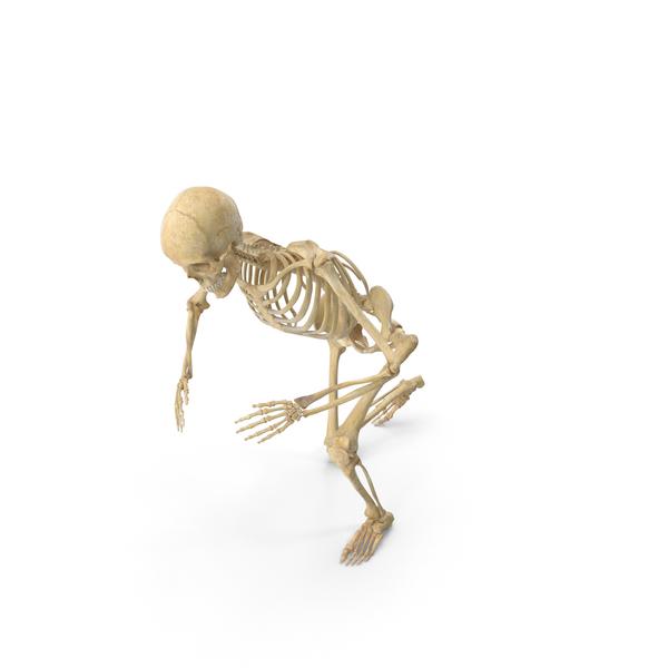 Real Human Female Skeleton Kneeling PNG & PSD Images