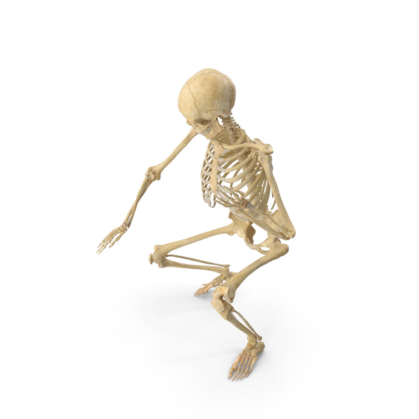 Real Human Female Skeleton Pose PNG & PSD Images