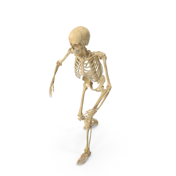 Real Human Female Skeleton Posed PNG & PSD Images