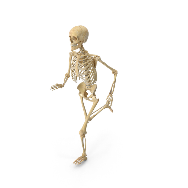 Real Human Female Skeleton Running PNG & PSD Images