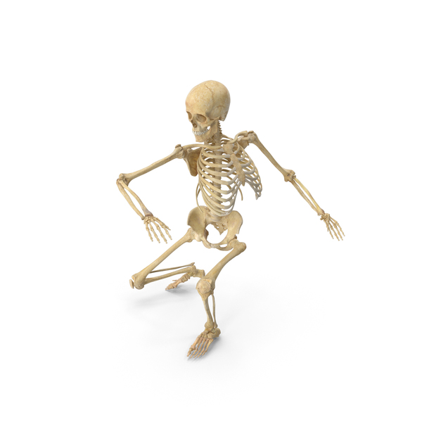 Real Human Female Skeleton Squatting PNG & PSD Images