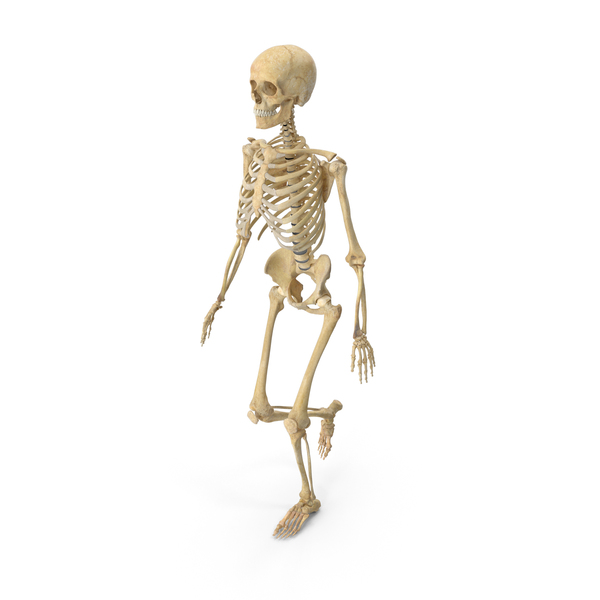 Real Human Female Skeleton Walking PNG & PSD Images