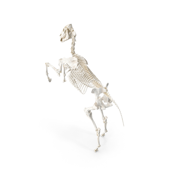 Rearing Horse Skeleton PNG & PSD Images