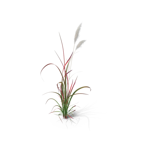 Ornamental: Red Baron Grass PNG & PSD Images