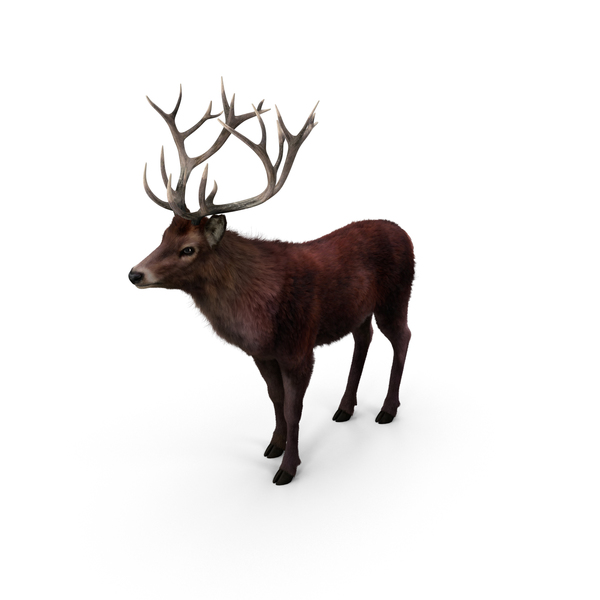 Red Deer Stag Object