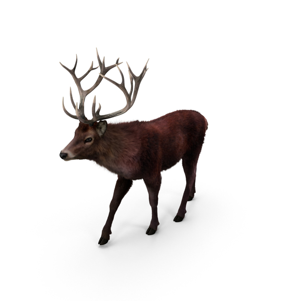 Red Deer Stag PNG & PSD Images