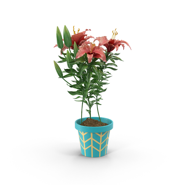 Red Flower in Blue Pot PNG & PSD Images