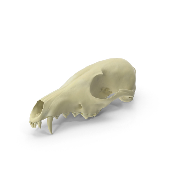 Red Fox Skull PNG & PSD Images