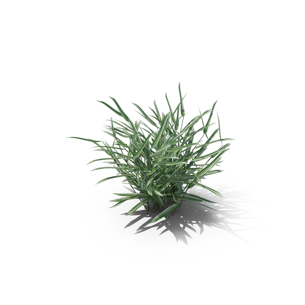 Reed Canary Grass PNG & PSD Images
