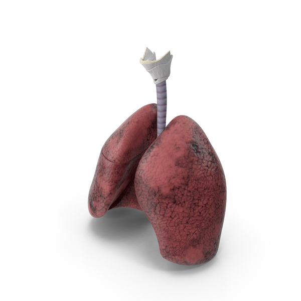 Respiratory System Smokers Lungs PNG & PSD Images