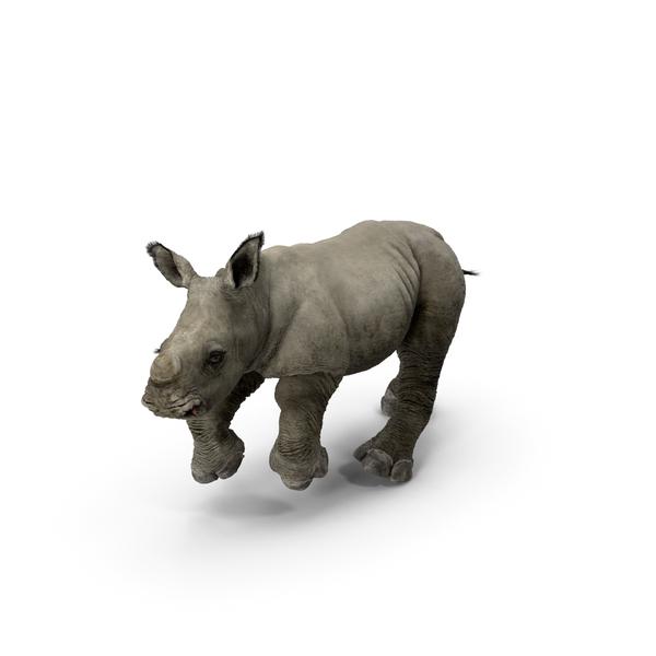 Rhino Baby Running Pose Fur PNG & PSD Images