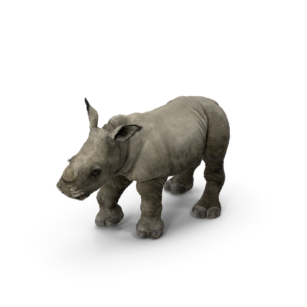 Rhino Baby Standing Pose Fur PNG & PSD Images