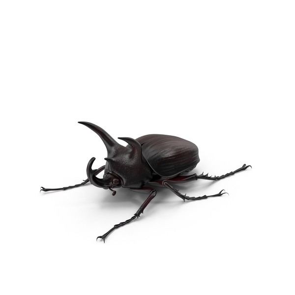 Rhinoceros Beetle PNG & PSD Images