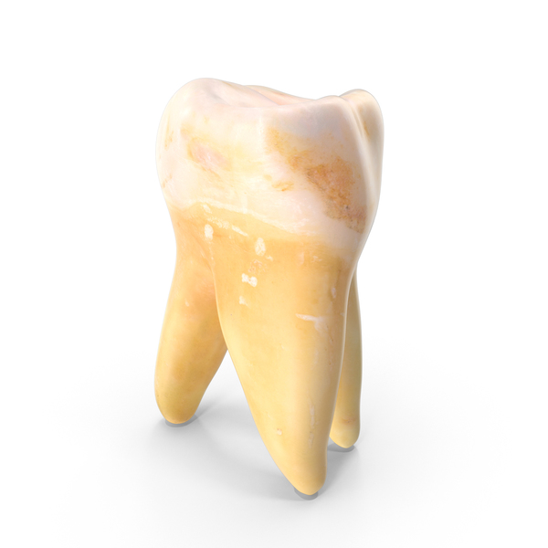 Right Molar Upper Jaw PNG & PSD Images