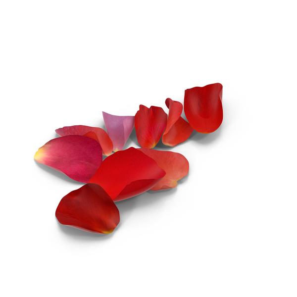 Rose Petals PNG & PSD Images
