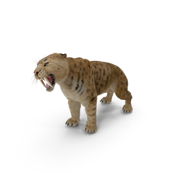 Saber Tooth Tiger Growls Pose with Fur PNG & PSD Images