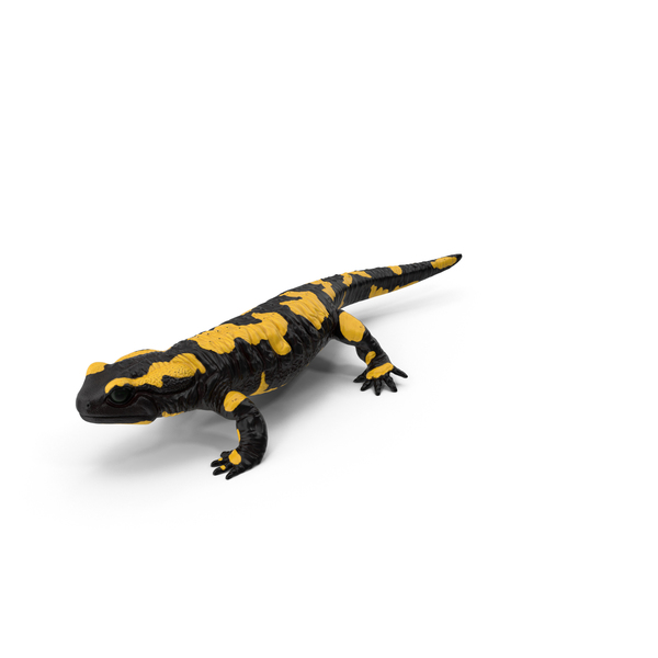 Salamander PNG & PSD Images