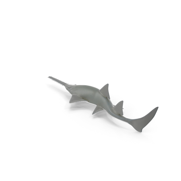 Sawfish Attack Pose PNG & PSD Images