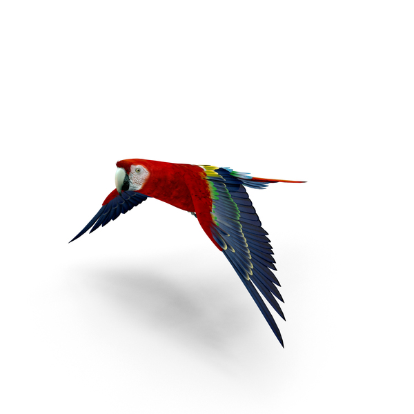 Scarlet Macaw PNG & PSD Images