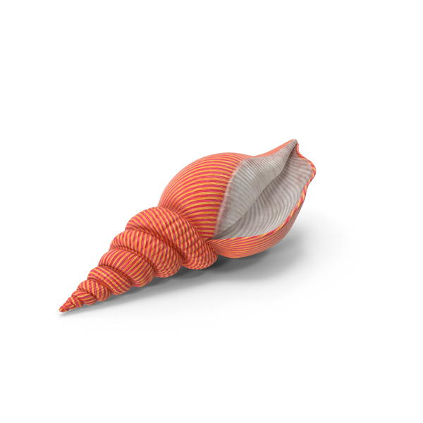 Sea Shell PNG & PSD Images