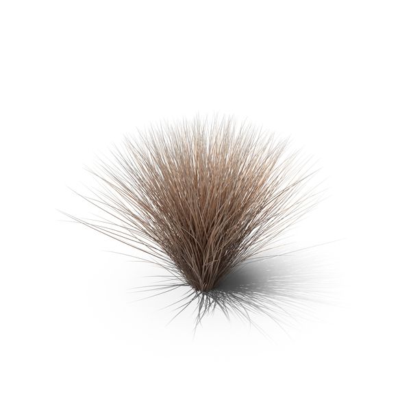 Sedge Brown PNG & PSD Images