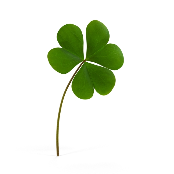 Four Leaf Clover: Shamrock PNG & PSD Images