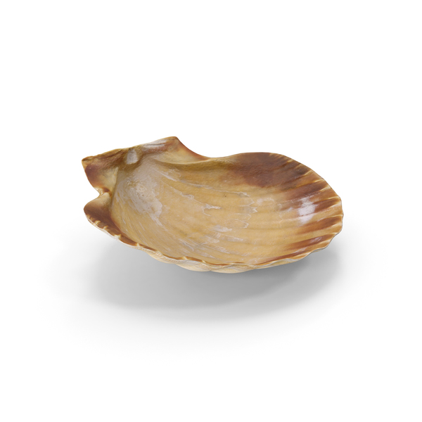 Shell PNG & PSD Images