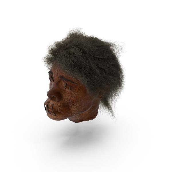 Shrunken Heads PNG & PSD Images