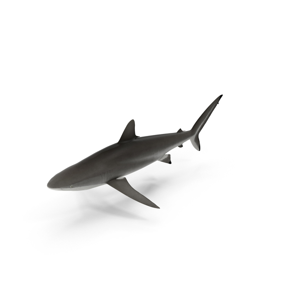 Paint Brush Container Shark Tank