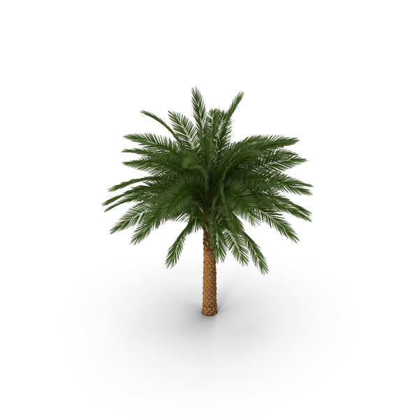 Silver Date Palm PNG & PSD Images