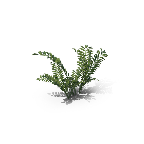Flowering Plants: Silverweed PNG & PSD Images